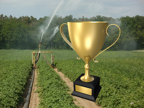 Award and Potato Field Under Irrigation