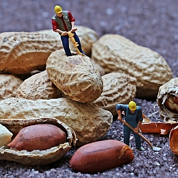 Construction Workers and Peanuts